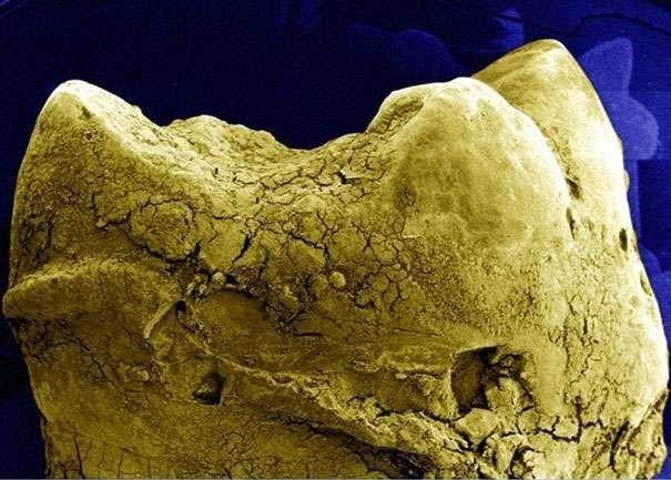 'Soi' cơ thể người 'khổng lồ' dưới kính hiển vi - anh 9