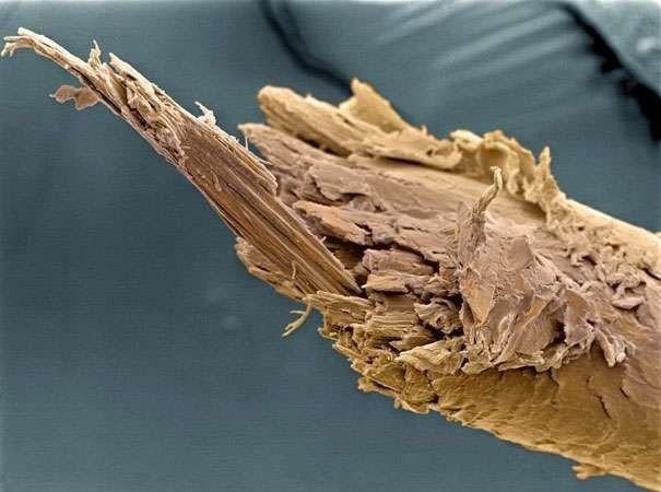 'Soi' cơ thể người 'khổng lồ' dưới kính hiển vi - anh 10
