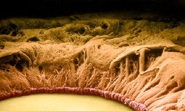 'Soi' cơ thể người 'khổng lồ' dưới kính hiển vi - anh 13