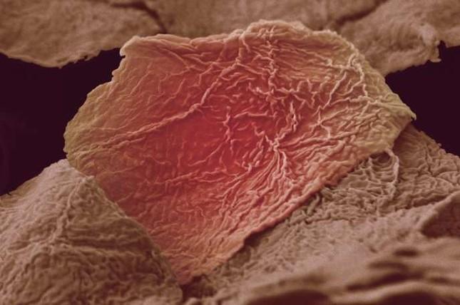 'Soi' cơ thể người 'khổng lồ' dưới kính hiển vi - anh 3