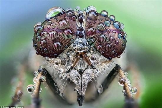Cấu tạo 'thần kỳ' của mắt Ruồi - Loài có phản ứng thị giác nhanh nhất thế giới động vật - anh 3