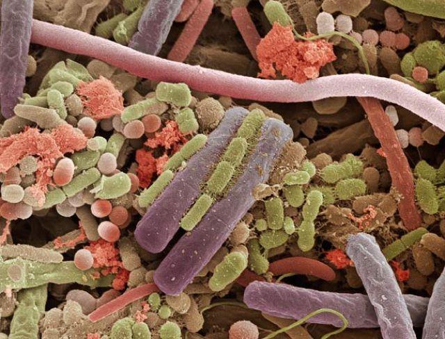 'Soi' cơ thể người 'khổng lồ' dưới kính hiển vi - anh 12