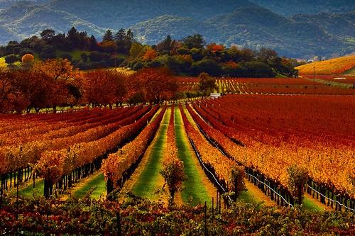 Tuscany - Vùng đất quyến rũ bậc nhất nước Ý [Photos] - anh 4