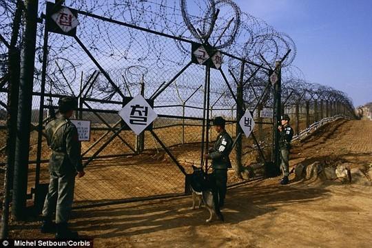 'Triều Tiên sẽ phải trả giá đắt cho việc cài mìn khu phi quân sự' - anh 1