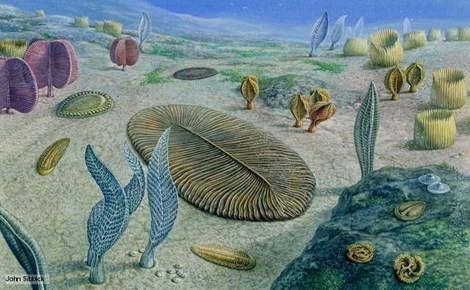Nguyên nhân thực sự của cuộc 'đại tuyệt chủng' đầu tiên trong lịch sử - anh 1