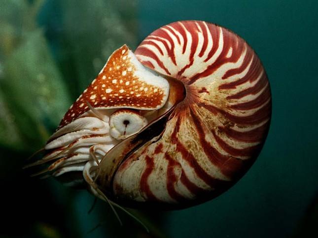 Phát hiện loài ốc biển tồn tại cách đây 500 triệu năm cực hiếm - anh 3