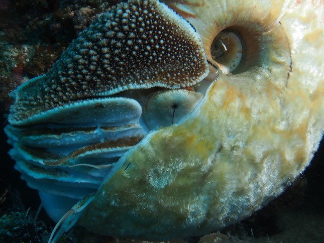 Phát hiện loài ốc biển tồn tại cách đây 500 triệu năm cực hiếm - anh 2