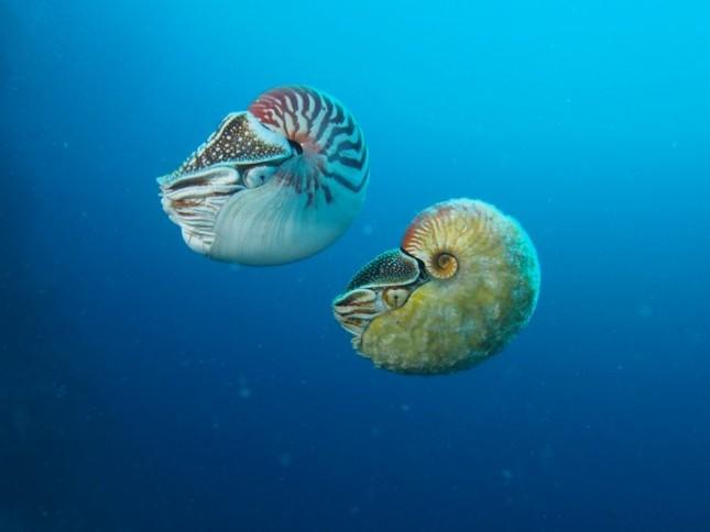 Phát hiện loài ốc biển tồn tại cách đây 500 triệu năm cực hiếm - anh 1