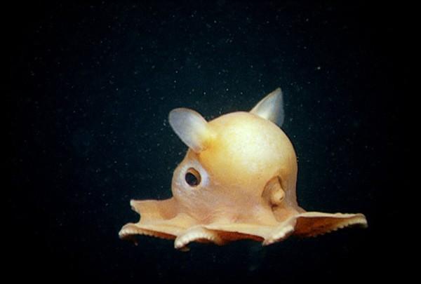 Hình dạng kỳ quái của những sinh vật sống nơi sâu nhất Trái đất - anh 1