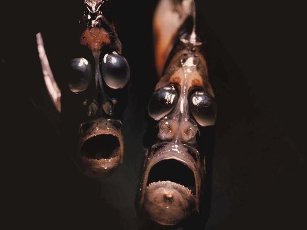 Hình dạng kỳ quái của những sinh vật sống nơi sâu nhất Trái đất - anh 5