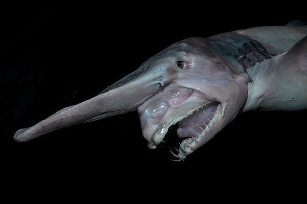 Hình dạng kỳ quái của những sinh vật sống nơi sâu nhất Trái đất - anh 6