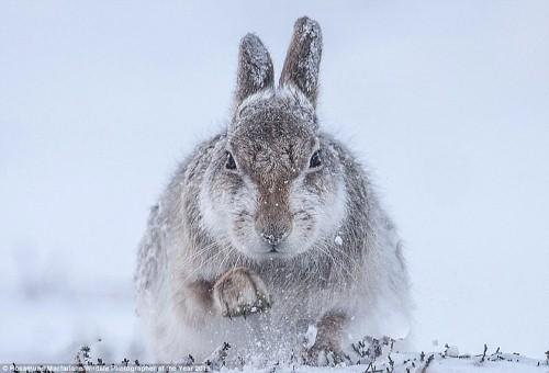 Ấn tượng 10 bức ảnh động vật hoang dã đẹp nhất 2015 - anh 1