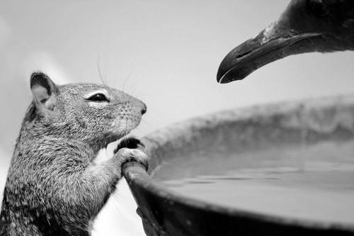 Ấn tượng 10 bức ảnh động vật hoang dã đẹp nhất 2015 - anh 8