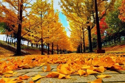 Ngây ngất trước 10 con đường mùa Thu đẹp nhất thế giới - anh 1