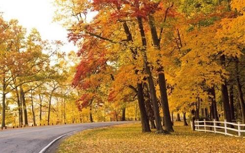 Ngây ngất trước 10 con đường mùa Thu đẹp nhất thế giới - anh 2