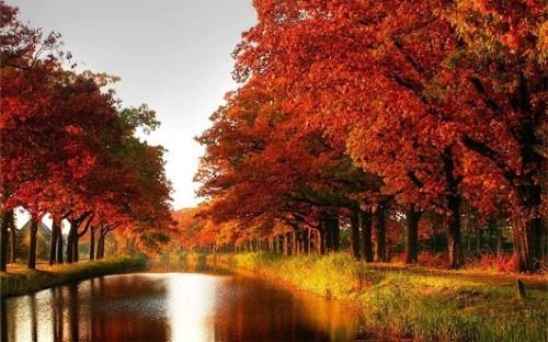 Ngây ngất trước 10 con đường mùa Thu đẹp nhất thế giới - anh 5