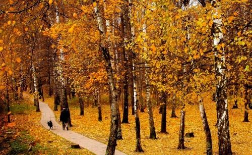 Ngây ngất trước 10 con đường mùa Thu đẹp nhất thế giới - anh 6
