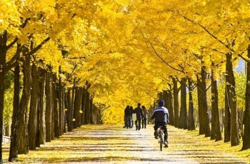 Ngây ngất trước 10 con đường mùa Thu đẹp nhất thế giới - anh 8