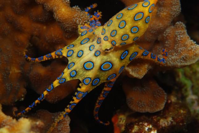 Funfact: Khám phá thế giới loài Bạch tuộc - anh 2