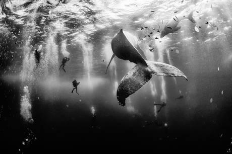 Danh sách 10 bức ảnh đoạt giải Cuộc thi National Geographic Photo 2015 - anh 1