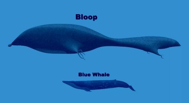 The Bloop - Bí ẩn 18 năm chôn giấu trong lòng đại dương - anh 3