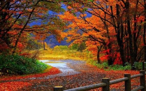 Ngắm sắc Thu đẹp đến nao lòng tại xứ sở sương mù - anh 1