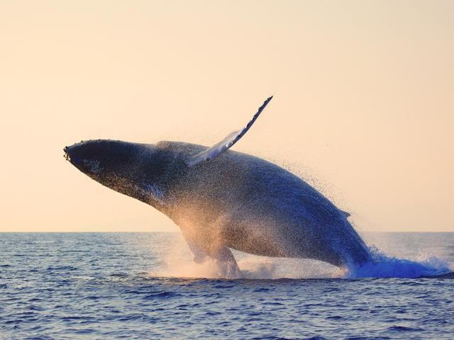Đại dương bí ẩn: Khám phá thế giới bí mật của loài Cá voi - anh 1