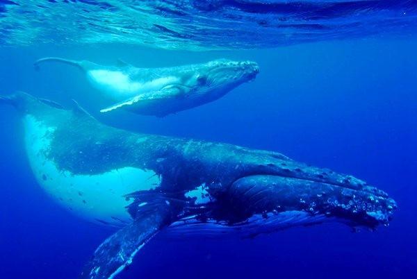 Đại dương bí ẩn: Khám phá thế giới bí mật của loài Cá voi - anh 3