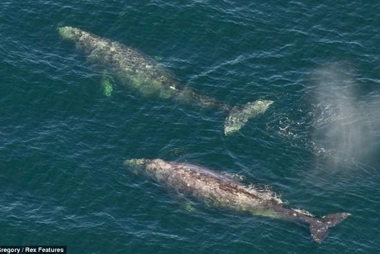 Đại dương bí ẩn: Khám phá thế giới bí mật của loài Cá voi - anh 5