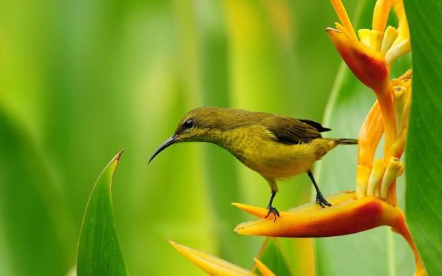 Bộ ảnh: Vẻ đẹp thiên thần của loài chim Ruồi - anh 5