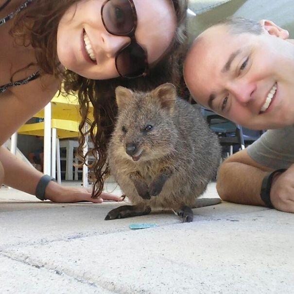 Những bức ảnh tự sướng 'bá đạo' nhất của Quokka - Loài vật hạnh phúc nhất thế giới - anh 11