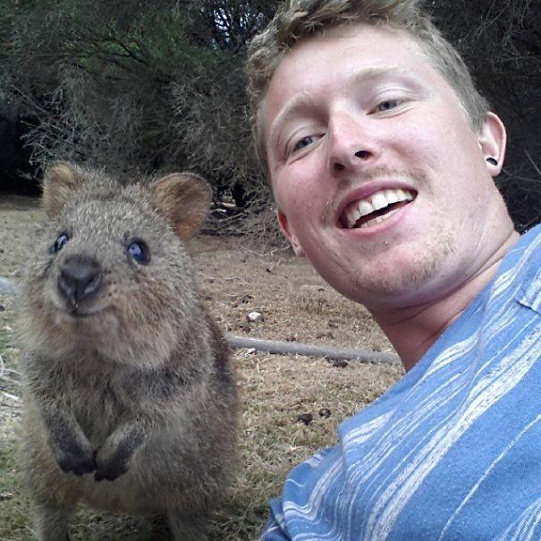 Những bức ảnh tự sướng 'bá đạo' nhất của Quokka - Loài vật hạnh phúc nhất thế giới - anh 5