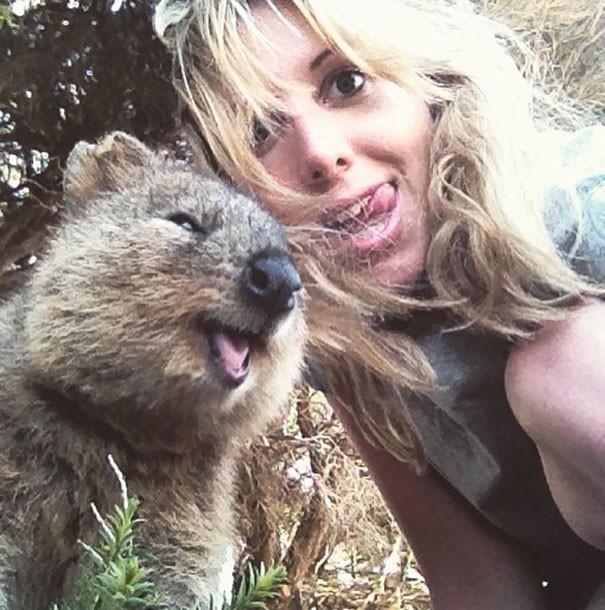 Những bức ảnh tự sướng 'bá đạo' nhất của Quokka - Loài vật hạnh phúc nhất thế giới - anh 6