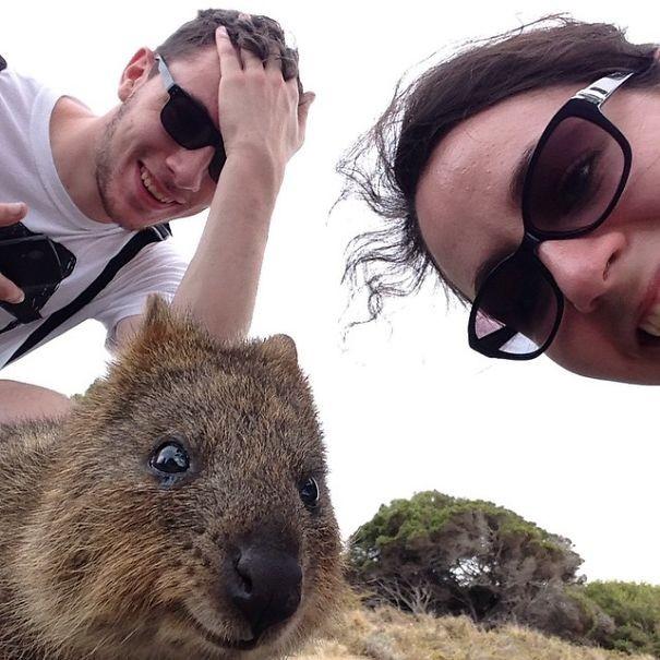 Những bức ảnh tự sướng 'bá đạo' nhất của Quokka - Loài vật hạnh phúc nhất thế giới - anh 9