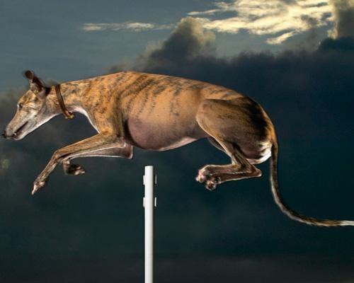 Những kỷ lục 'Guiness' của các chú chó trên thế giới - anh 7