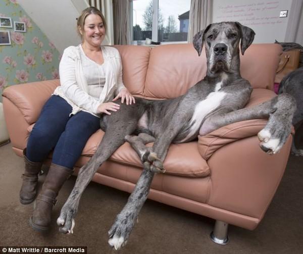 Những kỷ lục 'Guiness' của các chú chó trên thế giới - anh 2