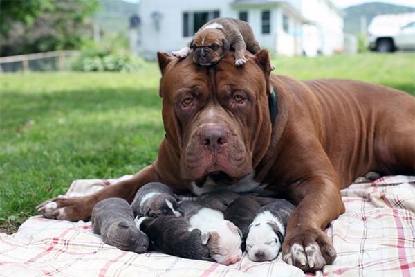 Những kỷ lục 'Guiness' của các chú chó trên thế giới - anh 3