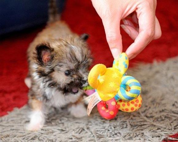Những kỷ lục 'Guiness' của các chú chó trên thế giới - anh 4