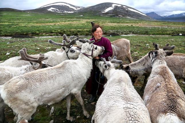 Khám phá cuộc sống của dân du mục Tsaatan ở Mông Cổ - anh 2