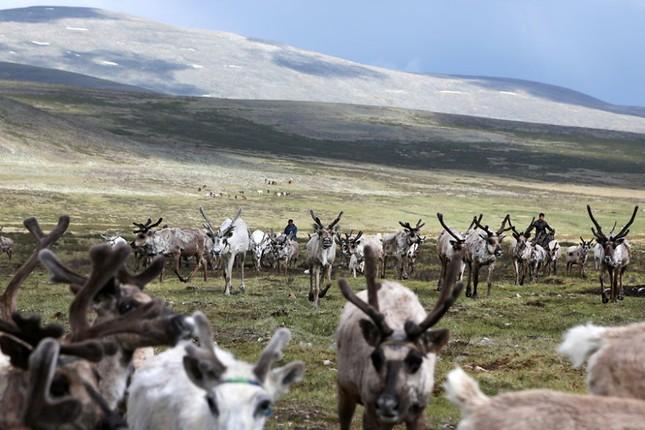 Khám phá cuộc sống của dân du mục Tsaatan ở Mông Cổ - anh 13