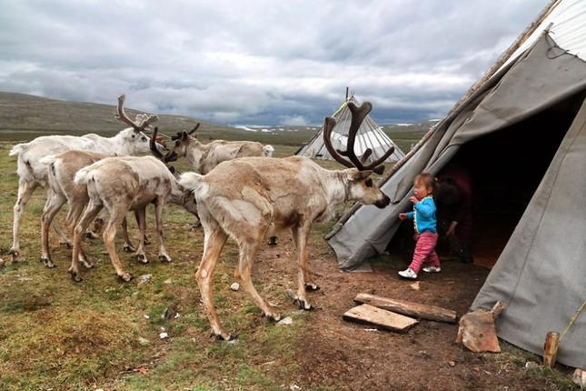 Khám phá cuộc sống của dân du mục Tsaatan ở Mông Cổ - anh 14