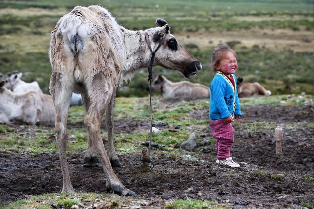 Khám phá cuộc sống của dân du mục Tsaatan ở Mông Cổ - anh 15