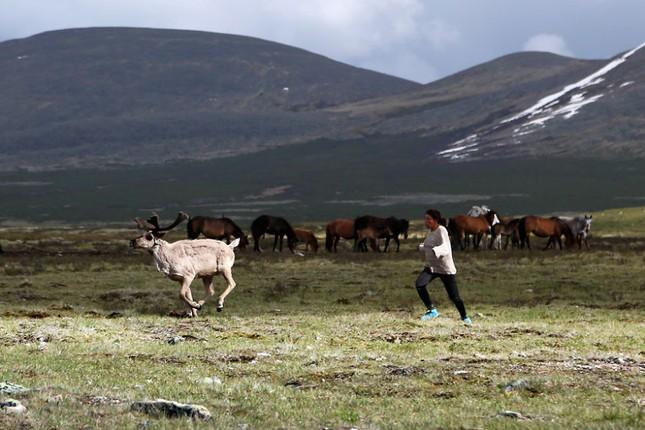 Khám phá cuộc sống của dân du mục Tsaatan ở Mông Cổ - anh 16