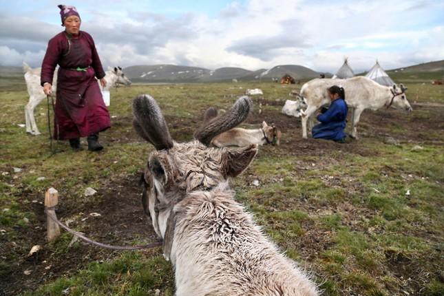 Khám phá cuộc sống của dân du mục Tsaatan ở Mông Cổ - anh 17