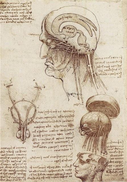 Khám phá bí mật tư duy của thiên tài toàn năng Leonardo da Vinci - anh 4