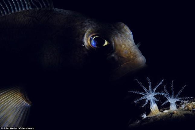 Ngắm vẻ đẹp thuần khiết của đại dương - anh 4