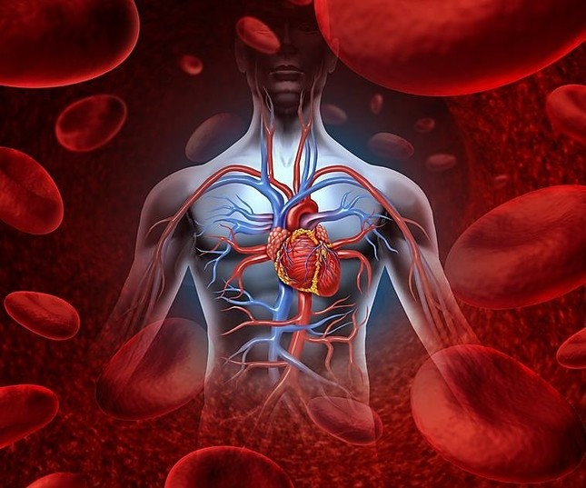 Funfacts thú vị về Trái tim bạn chưa từng biết - anh 2