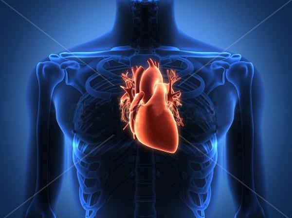Funfacts thú vị về Trái tim bạn chưa từng biết - anh 4