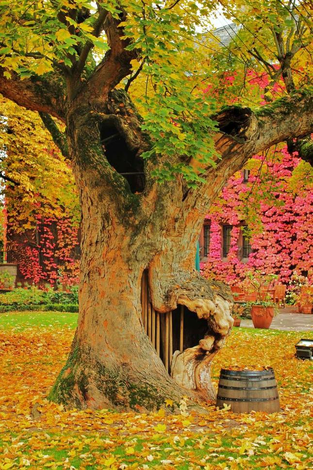 Ngắm mùa Thu tháng 10 đẹp đến ngỡ ngàng trên khắp thế giới - anh 2
