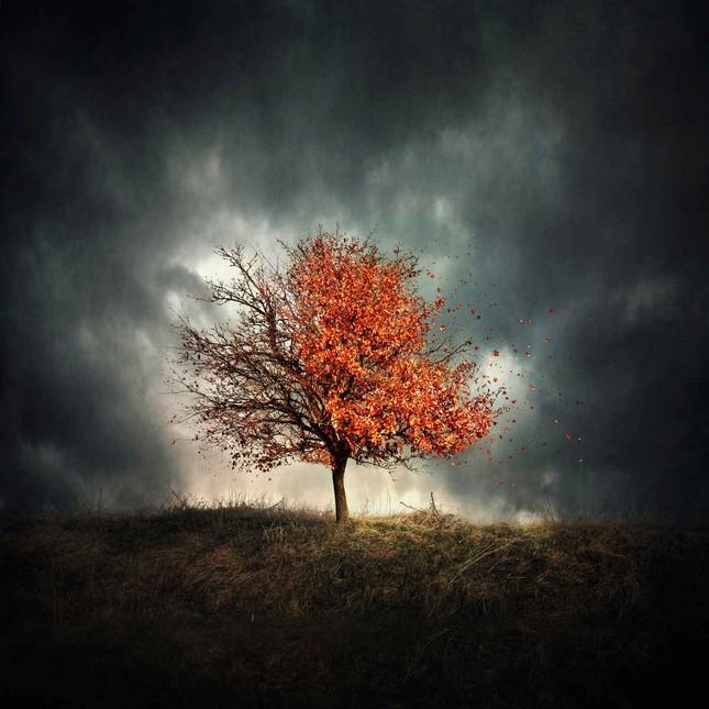 Ngắm mùa Thu tháng 10 đẹp đến ngỡ ngàng trên khắp thế giới - anh 12